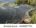 Polluted River Bank