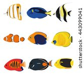 tropical fishes set containing... | Shutterstock .eps vector #443099041