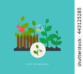 plant outbreeding. vector scene ... | Shutterstock .eps vector #443125285