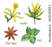 herbs. watercolor illustration. ... | Shutterstock . vector #443159851