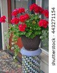 Beautiful Red Geraniums Plante...