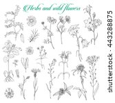 set of isolated herbs and wild... | Shutterstock .eps vector #443288875
