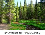 Mountain Stream Surrounded By...
