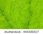 Macro Photo Of Natural Green...