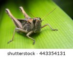 An Image Of Grasshoppers ....