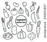 vegetables line art. cabbage ... | Shutterstock .eps vector #443451847