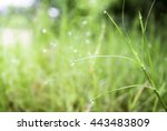 natural blurred background. | Shutterstock . vector #443483809