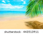 beautiful sunny beach. view of... | Shutterstock . vector #443513911
