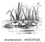 vector reeds and water lilies.... | Shutterstock .eps vector #443529181