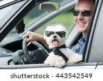 Small Dog Maltese In A Car Wit...