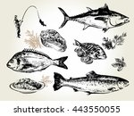 hand drawn sketch set of... | Shutterstock .eps vector #443550055