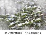 fir branches covered with snow. ... | Shutterstock . vector #443550841