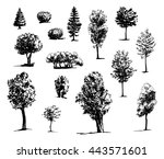 Tree Sketch Drawn Ink...