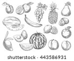 selected fresh fruits sketches... | Shutterstock .eps vector #443586931