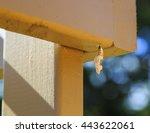 Gulf Fritillary Caterpillars ...
