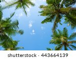 Exotic Tropical Palm Trees At...