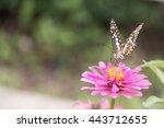 butterfly on the flower   Shutterstock . vector #443712655