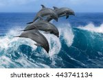 four beautiful dolphins jumping ... | Shutterstock . vector #443741134