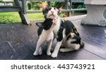 Stock photo kittens and mother cat lovely 443743921