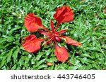 the bright red flower falls on... | Shutterstock . vector #443746405