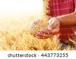 close up of senior farmers... | Shutterstock . vector #443773255