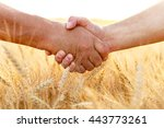 farmers handshake over the... | Shutterstock . vector #443773261