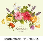 vector natural composition with ... | Shutterstock .eps vector #443788015