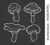 mushroom collection on...   Shutterstock .eps vector #443829391