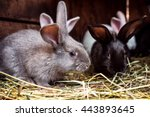 Rabbit. Mammal Animal In The...
