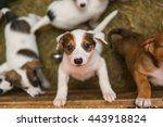 Stock photo  little puppy at the shelter looks with hope take me i m the best 443918824