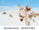 A Yucca Plant Grows Rapidly To...