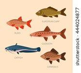 set of five river fish  rudd ... | Shutterstock .eps vector #444024877
