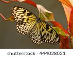 Beautiful Butterfly Paper Kite...