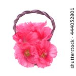 Small photo of Beautiful decorating hollyhock flowers /Althaea officinalis/ in basket isolated white background