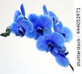 Blue Flower Orchid On Light...
