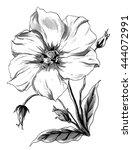 tropical eustoma flower in... | Shutterstock . vector #444072991