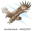 eagle with large wings ...   Shutterstock . vector #44422537
