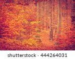 Colors Of Nature In Autumn....