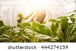 Soft Image Man Harvest Organic...