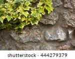 English Ivy On Stone Wall