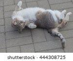 Cat Lies On A Sidewalk