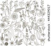 linear decorative flowers ... | Shutterstock .eps vector #444329017
