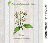 clove  essential oil label ...   Shutterstock .eps vector #444449029