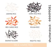rice varieties. dark wild rice  ... | Shutterstock .eps vector #444499081