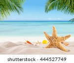 tropical beach with various... | Shutterstock . vector #444527749