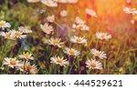nature background. field of... | Shutterstock . vector #444529621