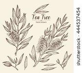 collection of tea tree.... | Shutterstock .eps vector #444537454