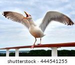 Screaming Seagull On Handrail...