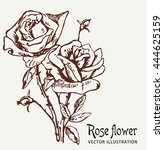 hand drawn roses. vector... | Shutterstock .eps vector #444625159