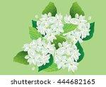 jasmine flowers  on green... | Shutterstock .eps vector #444682165